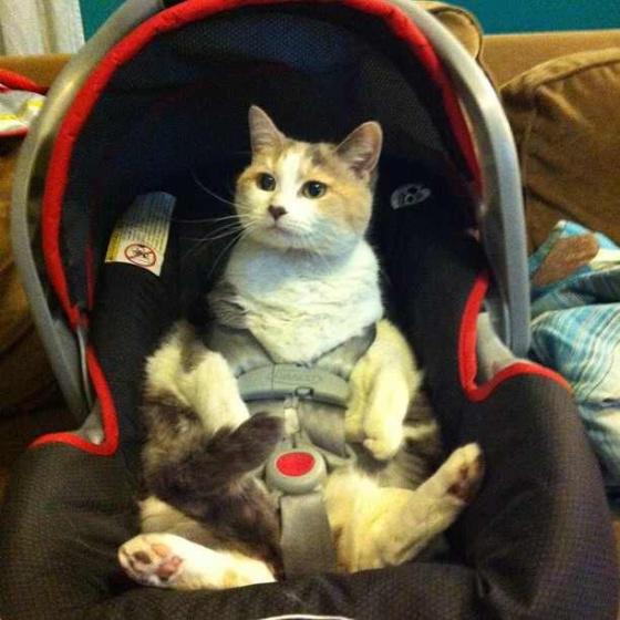 Автомобильные сидения для котов или что такое inbound-маркетинг (видео)