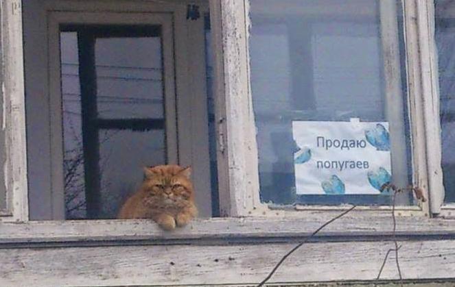 SMM — это не только котики