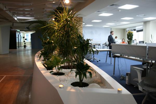 Растения в офисе Яндекс.Украина